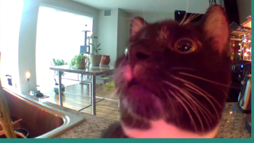 Concerned cat thinks owner is stuck inside the camera. 🤣