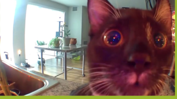 She hears her human through camera for the first time