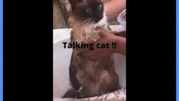 What is this cat saying? [35 sec]